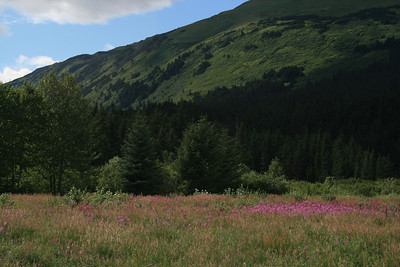 The bright pink fireweed was everywhere.