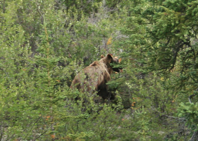 One last bear siting as we drove into the park for the final time.